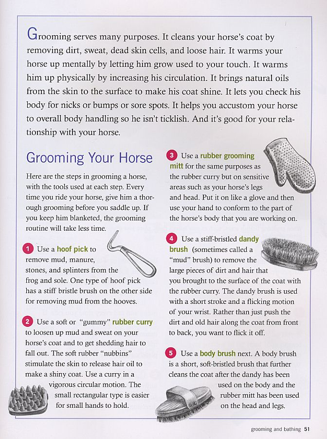 Excerpt from Cherry Hill's Horse Care for Kids; grooming and bathing your horse.