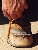 Good Horseshoeing - flares should be removed every time the hoof is trimmed.