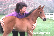 Cherry with foal