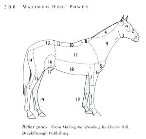 reflex zones of the horse, Horse Training, Horse Care, and Riding Books and Videos from Cherry Hill at www.horsekeeping.com