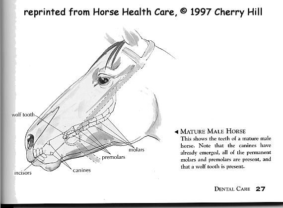 horse, teeth, incisors, dental, molars, premolars, wolf teeth, canines, horse books, book, horses, equine, horse care, health care, dental care, equestrian, Cherry Hill, health, teeth mature, equine, pony, permanent, deciduous